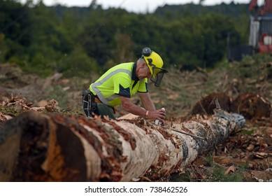 KUMARA, NEW ZEALAND, SEPTEMBER 20, 2017: A forestry worker measures a Pinus radiata log at a logging site near Kumara, West Coast, New Zealand.