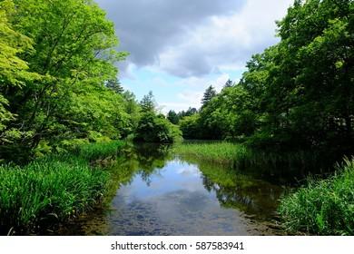 Kumoba pond surrounded by fresh green, Karuizawa, Nagano, Japan.
