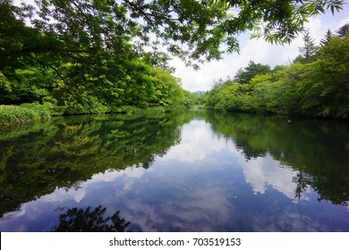 Kumoba pond surrounded by fresh green, Karuizawa, Nagano, Japan.