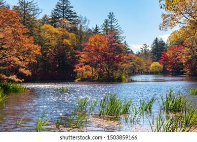 雲梅池秋の紅葉景色、晴れた日の面に多彩色。日本・長野県軽井沢市の公園の周りに赤、オレンジ、黄、金色のカラフルな木