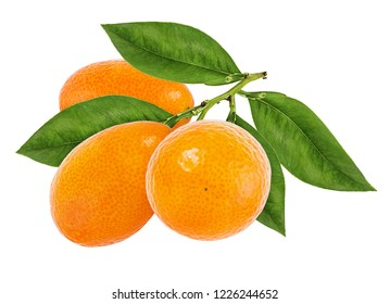 Kumquat isolated on white background