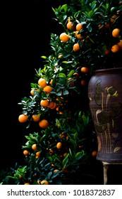 Kumquat tree put in the vase as bonsai at VanPhuc garden, HaNoi capital, VietNam, Jan2018