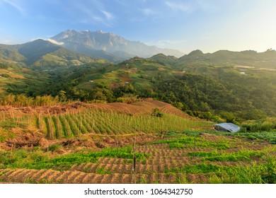 Kundasang Sabah landscape with cabbage farm and Mount Kinabalu at far background during morning.