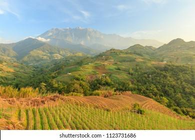 Kundasang Sabah landscape with cabbage farm and Mount Kinabalu at far background during morning.