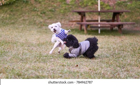 Kung Fu Fighting Dogs