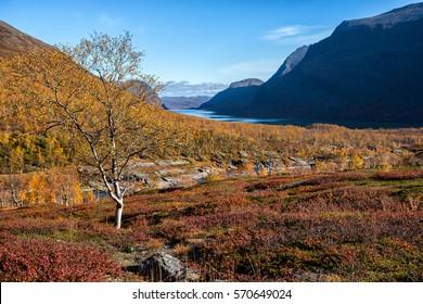Kungsleden hiking Trail in Autumn in Northern Sweden - Katium