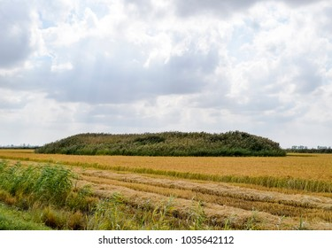 Kurgan grave of ancient wars overgrown with reeds in the middle of the rice field - Shutterstock ID 1035642112
