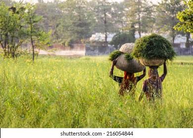 KUSHINAGAR, INDIA - MARCH 10, 2013: Indian women carry hay back home. India, Kushinagar. March 10, 2013