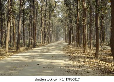 Kusmi Jungel gorakhpur uttar pradesh