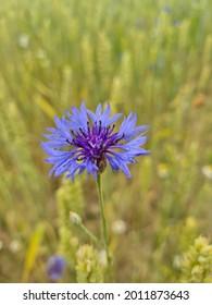 Kvet príroda rastliny rastlina flower - Shutterstock ID 2011873643