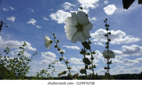 tło kwiat niebo - Shutterstock ID 1159976728