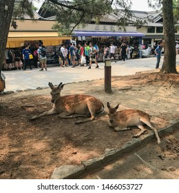 Kyoto, Japan, 31st, May, 2017. The lovely deers are lying on the ground in Nara Park. Nara Park is a public park located in the city of Nara, Japan, at the foot of Mount Wakakusa.