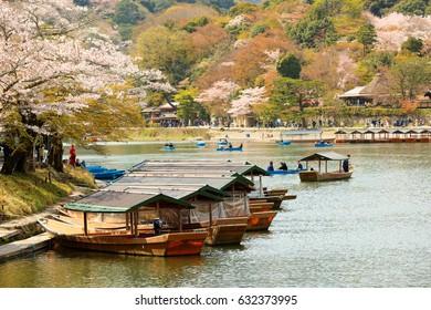 Kyoto, Japan - April 11, 2017: Cherry Blossom along the Katsura River, Kyoto, Japan.