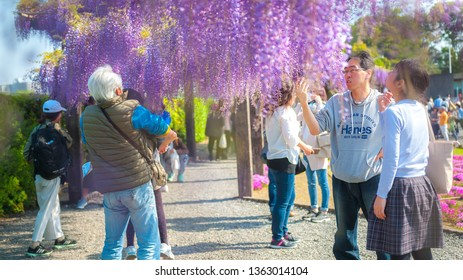 KYOTO, JAPAN - APRIL 30, 2017 : Families and tourists visit Toba Water Treatment Plant, which is opened to the public during springtime for people to enjoy its 120 meter long wisteria trellis.