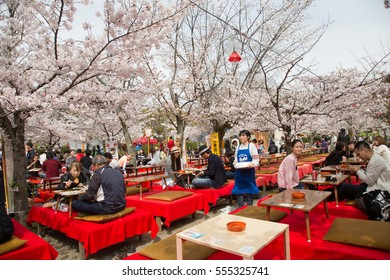 KYOTO, JAPAN - April 6, 2016 : People enjoy spring season by partaking in nighttime Hanami festivals in Maruyama Park. The annual festivals coincide with the seasonal blooming of the cherry blossoms.