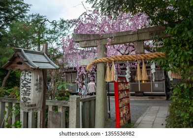 KYOTO, JAPAN - APRIL 6, 2017 : Beautiful spring view with cherry trees in full bloom, seen at Suika Tenmangu Shrine in Kyoto City, which is the first Tenmangu Shrine in Japan.