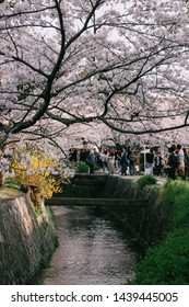KYOTO, JAPAN - APRIL 6, 2019 : Philosopher's Way in the Springtime at Kyoto, Japan. The Philosopher's Walk is a popular pedestrian path that follows a cherry-tree-lined canal in Kyoto.