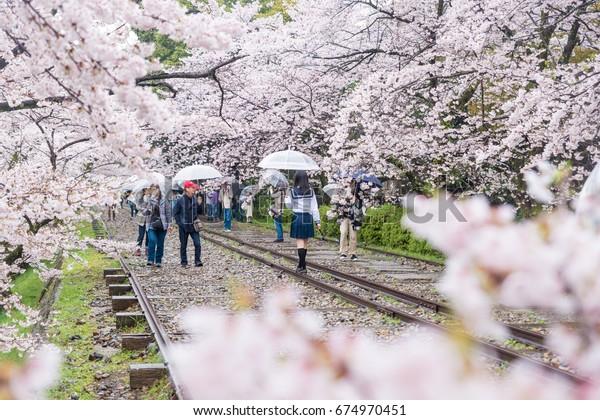 Kyoto, Japan - April 9, 2017: People enjoy spring season at Keage incline with sakura (cherry blossoms), Kyoto.