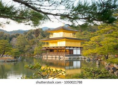 KYOTO, JAPAN - January 29: Old Japanese golden castle, Kinkakuji Temple Walk with ChaMike in Japan   Kinkakuji Temple or Golden Pavilion