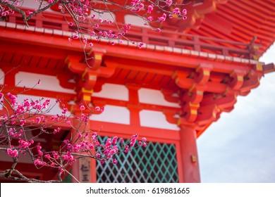 KYOTO, JAPAN - MARCH 12, 2017: Plum blossom in front of Kiyomi-zu Dera