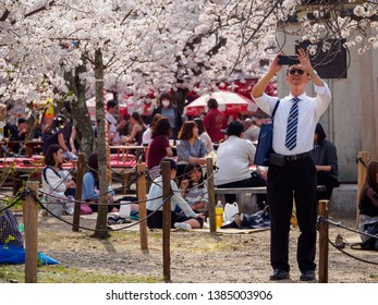 KYOTO, JAPAN - MARCH 29, 2018: A salaryman takes smartphone photos of Somei Yoshino cherry blossom flowers at a crowded Maruyama Park, Higashiyama. Travel and Hanami sakura festival.