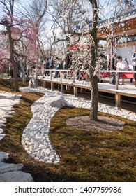 Kyoto, Japan - March 9, 2019: People enjoying ume plum in full bloom at the garden of Kitano Tenmangu shinto shrine