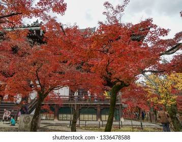 Kyoto, Japan - Nov 20, 2016. Autumn park at sunny day in Tokyo, Japan. In Japan, the natural phenomenon is called koyo or momiji, meaning red leaf at autumn.