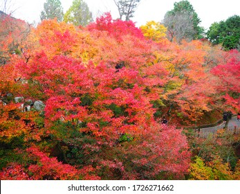 Kyoto, Japan -November 26, 2016: Tofukuji Temple with red and yellow maple leaves in autumn season. The temple is one of the most famous and popular places to enjoy autumn view in Kyoto, Japan.