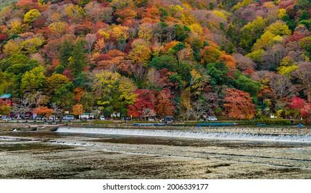 KYOTO, JAPAN - NOVEMBER 26, 2019 : Colorful autumn  Arashiyama forest along Katsura river. Kyoto, Japan.