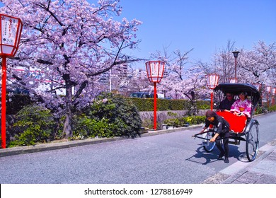 Kyoto, Japan-March 29, 2018: Kyoto Higashiyama ward with cherry blossoms in full bloom. A rickshaw riding a road along the Kamogawa of Kyoto Gojo.