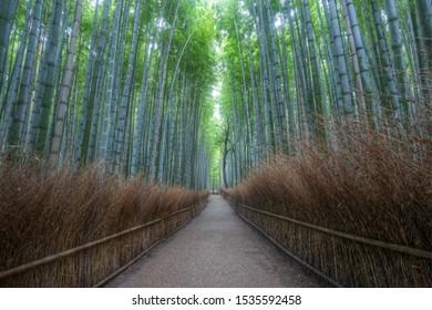 Kyoto,Arashiyama, la foresta di bamboo