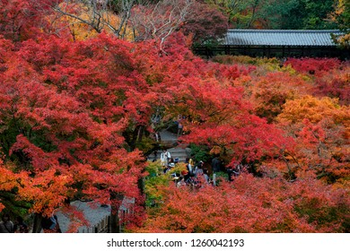 KYOTO,JAPAN - 26 November 2018: Tofukuji temple is one of the most popular place to see red maple during late autumn of Japan.