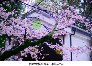 Extreme Closeup Cherry Blossom Tree Near Stock Photo Edit Now