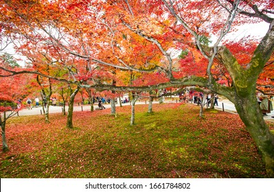 KYOTO,JAPAN-NOVEMBER 27,2019:Visitors visiting Tofukuji temple in autumn ,Kyoto. This place is one of destination for visitor who come to Kyoto. .