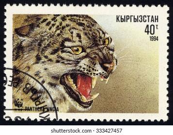 KYRGYZSTAN - CIRCA 1994: A stamp printed in Kyrgyzstan, shows Panthera uncia or snow leopard, series, circa 1994