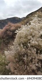 Kyrgyzstan flora (in the Konorchek canyon region)