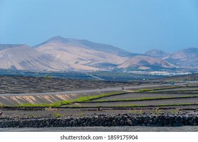La Geria vineyard on black volcanic soil.Scenic landscape with volcanic vineyards. Lanzarote. Canary Islands. Spain