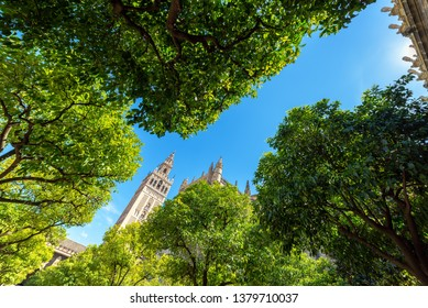 La Giralda tower as seen from an orange grove in the cathedral of the UNESCO World Heritage city of Seville, Spain