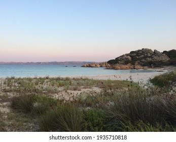 La Maddalena, Sardinia. August 2019. Typical vegetation of the Macchia Mediterrane in the Maddalena archipelago.