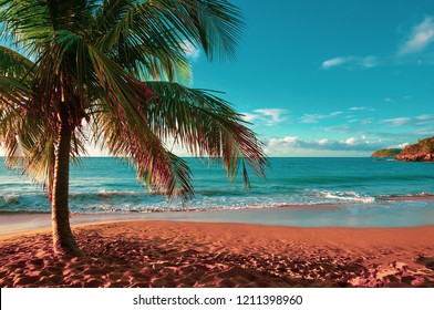 La Perle beach (pearl beach) with isolated coconut tree in Deshaies, Guadeloupe, French West Indies