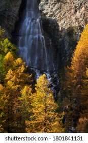 La Pisse waterfall and golden larch trees in Autumn in the Queyras Regional Natural Park. Ceillac, Hautes-Alpes (05), Alps, France