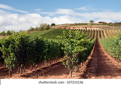 La Rioja is both a province and an autonomous region located in the North of Spain.