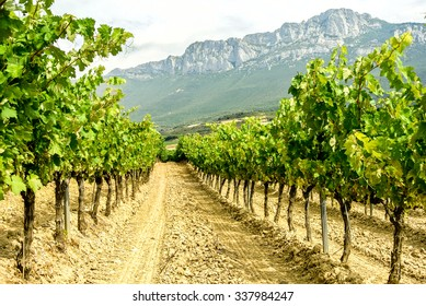 LA RIOJA, SPAIN - MAY 5: One part of the famous Rioja wines are produced in the vineyards of the Rioja Alavesa which are located in the north of Spain. May 5, 2015 in La Rioja, Spain