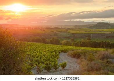 La Rioja. Spain. Vineyard in sunset.