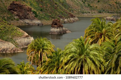 La sorrueda, dam and palm trees, Tirajana ravine, Gran canaria, Canary islands