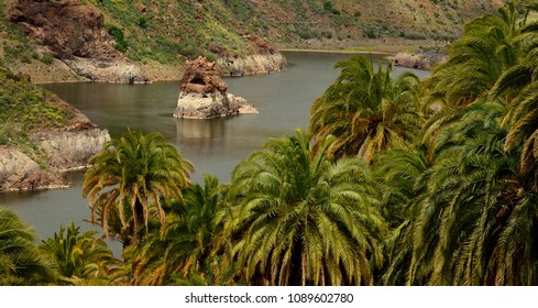 La sorrueda, Gran canaria, rainwater dam and palm forest, Tirajana ravine, Canary islands