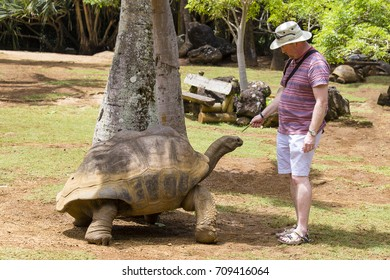 LA VANILLE NATURE PARK, MAURITIUS - MARCH 08, 2017 : Unknown man feeds a giant turtle in La Vanille Nature Park, island Mauritius , Close up