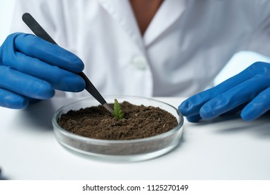 the lab assistant in blue gloves corrects the green leaf in the ground