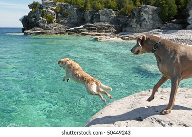 Lab jumping into cold clear water