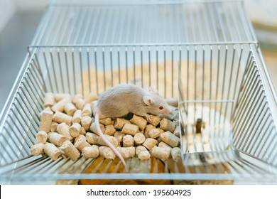 Rat Cage Images, Stock Photos & Vectors | Shutterstock